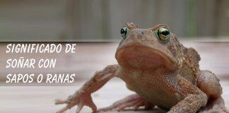 Soñar con sapo o rana