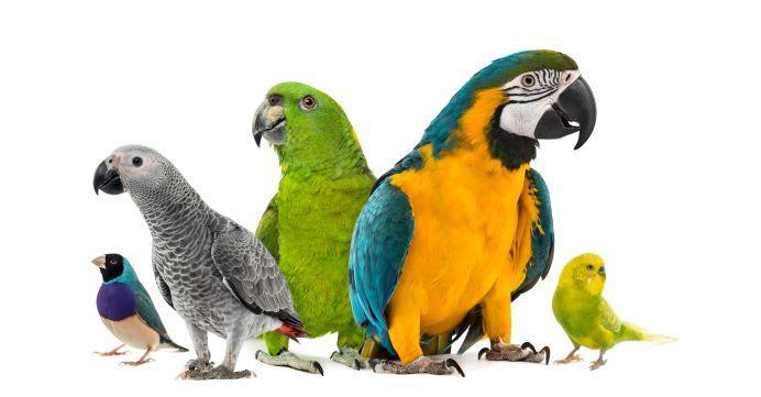Grupo de loros de distintas especies y colores