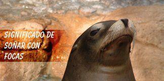 Soñar con focas