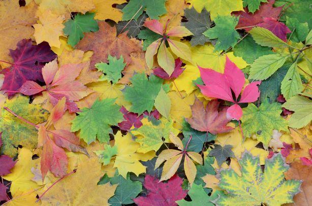 Hojas de distintos colores , símbolo del otoño
