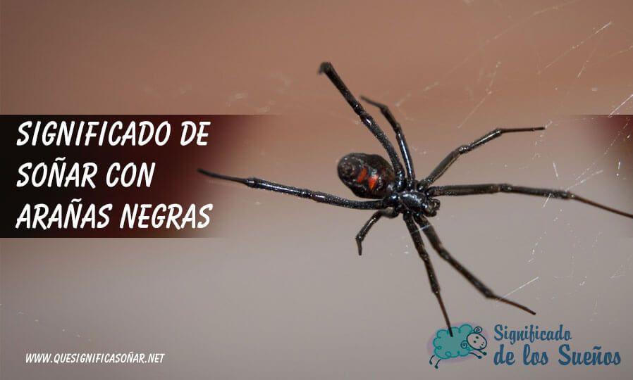Araña negra haciendo su telaraña