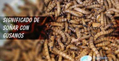 Puñado de gusanos marrones