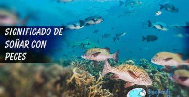 Paisaje marino con peces y arrecifes